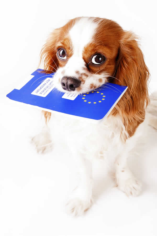 cavalier with passport